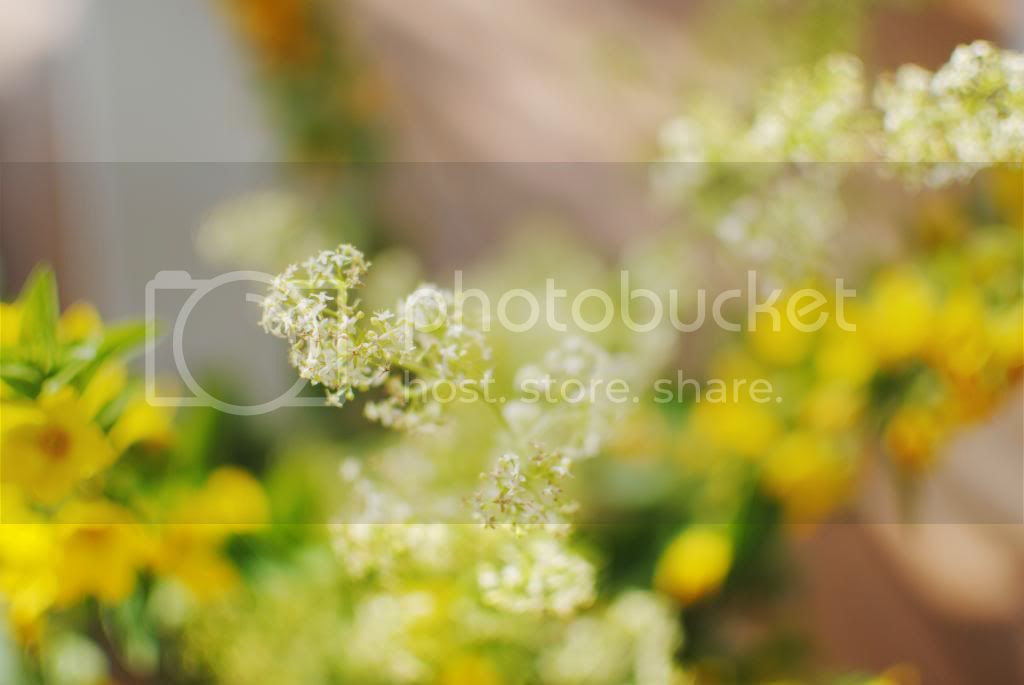 photo heinaumlkuu050_zpscf7172c6.jpg