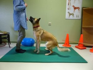 obediência para cães