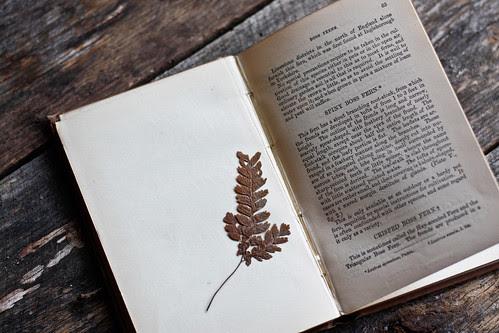 a fern book