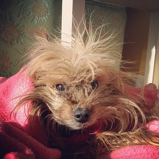 Day14 muffins 13th bday :) with her crazy hair and sleepy face lol 1.14.13 #jessie365