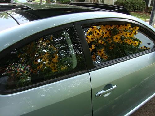 my car o' black eyed susans
