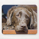 Sad Chocolate Lab mousepad