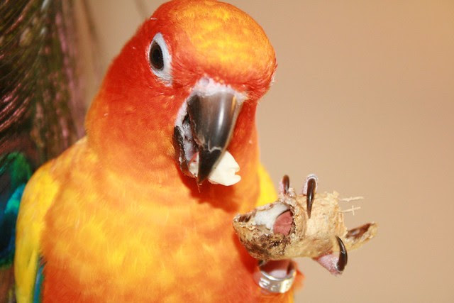 peanut bird