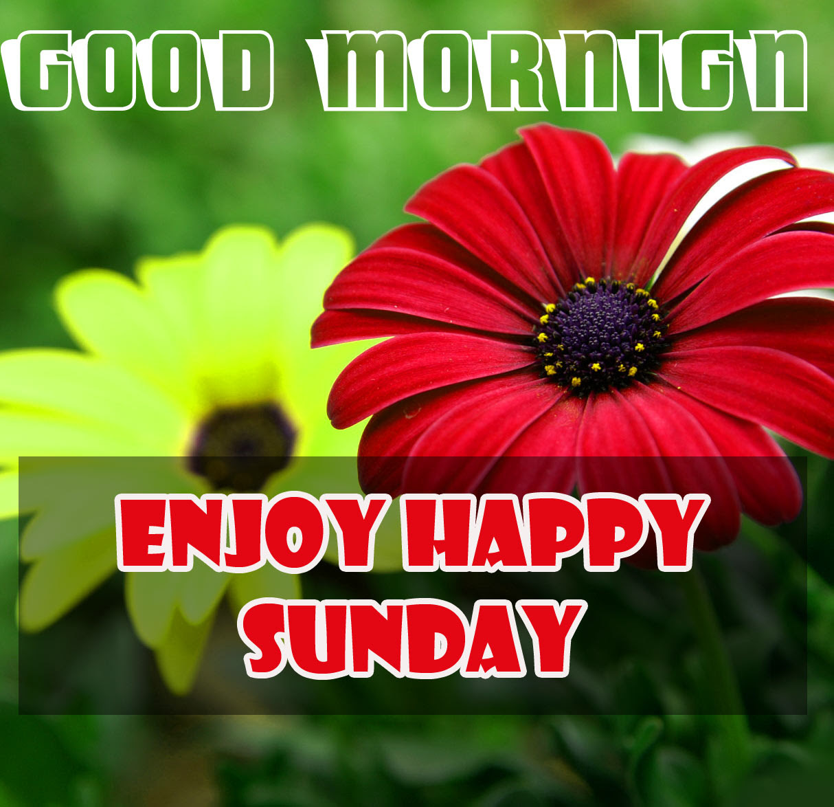 Sunday Good Morning Wishes Pics Free for Facebook