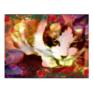 snowshoe kitty in the red roses postcard