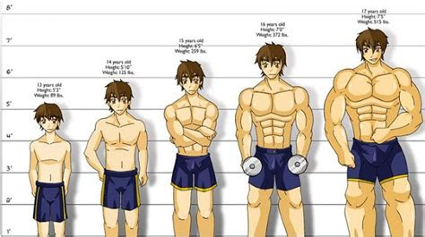 long     build muscle heres  truth