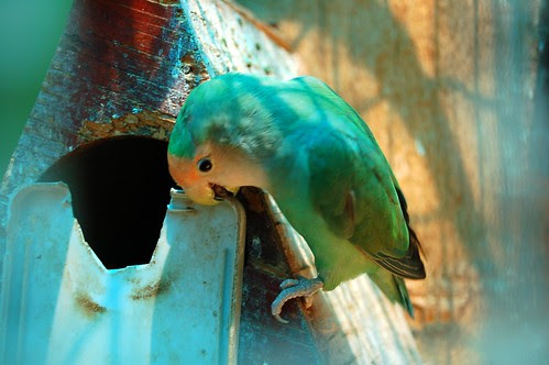 parrot at Siam Divers