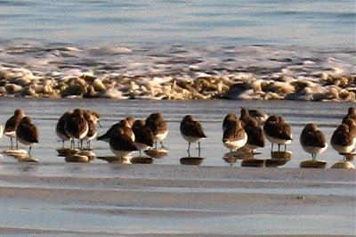 birds&wave