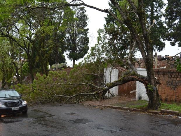 Diversas árvores caíram sobre a rede elétrica na capital, afetando fornecimento de energia (Foto: Alessandro Agendes/RBS TV)