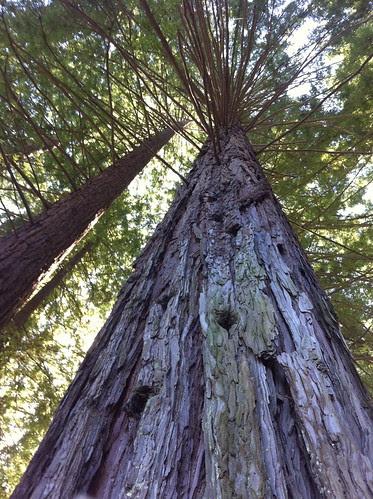 Redwood Height