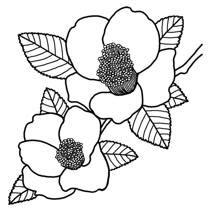 ユキツバキ雪椿白黒新潟県の木都道府県の木花鳥イラスト素材