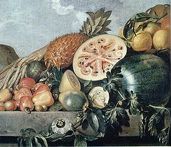 Pintura de frutas brasileiras (Albert Eckhout)