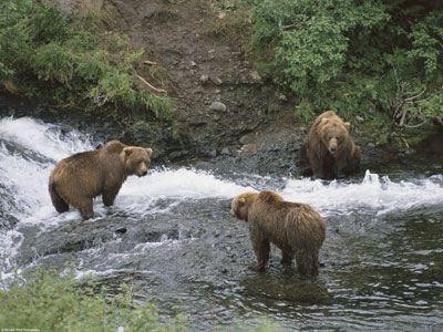 Ηρθαν αντιμετωποι με τρεις αρκουδες στα ορεινα της Ηπειρου