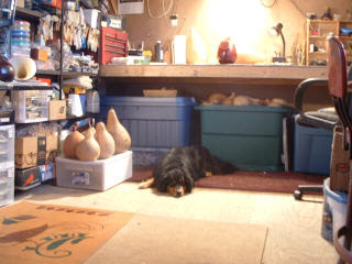 Lucky Dog in the shop