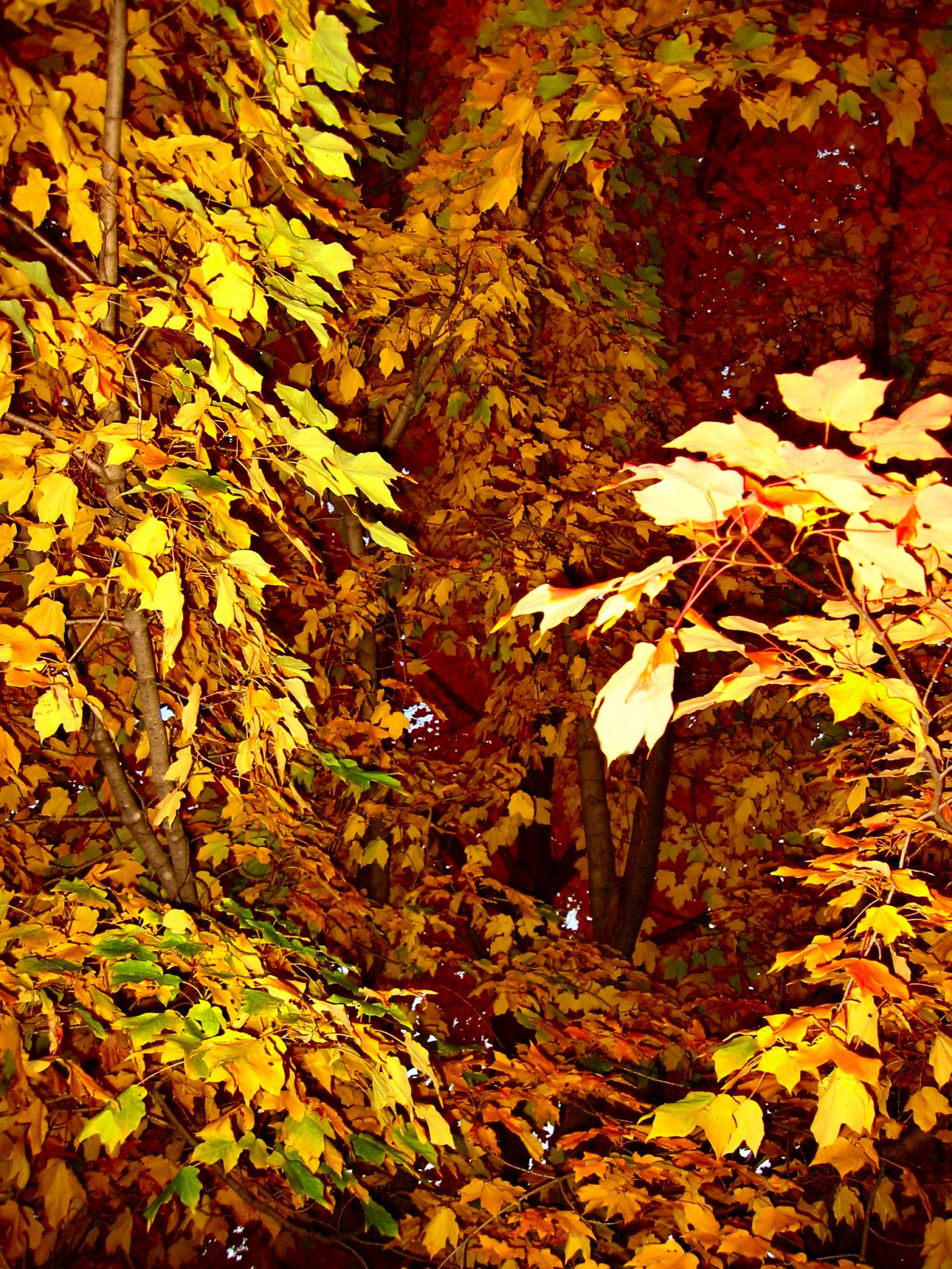 Wiconsin Autumn Photo - soul-amp.com