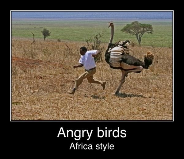 Angry Birds African Style Funny Pictures Quotes Pics Photos