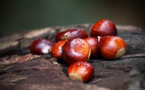Sweet Chestnuts por benwmbc