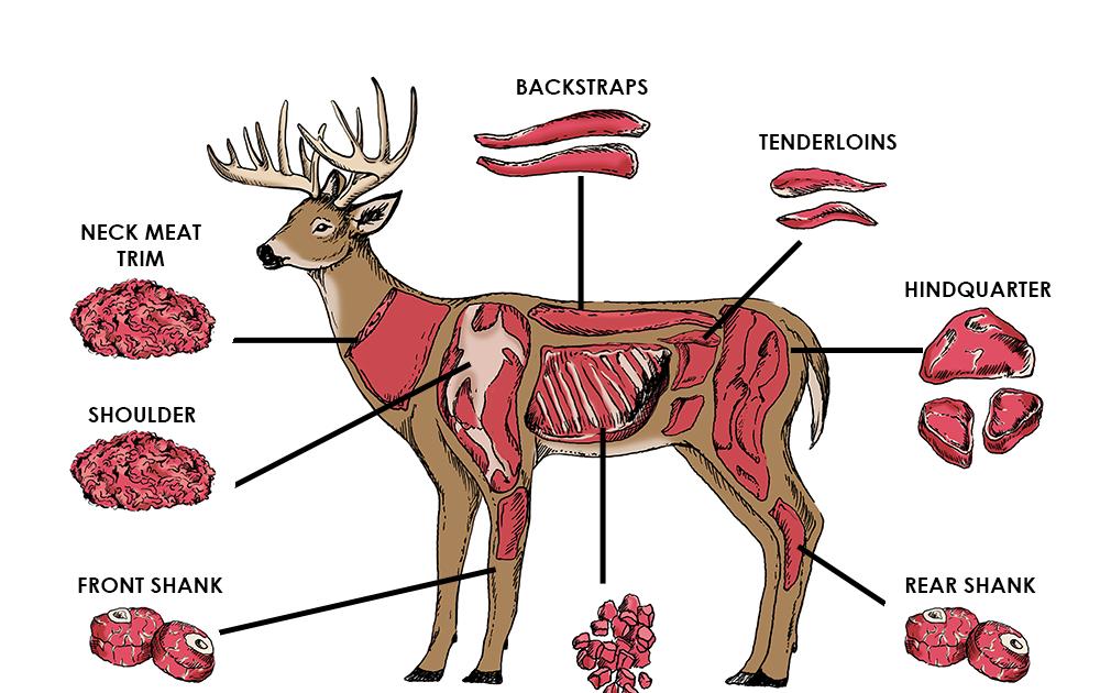 Diagram Of Deer Meat Cuts - Free Wiring Diagram