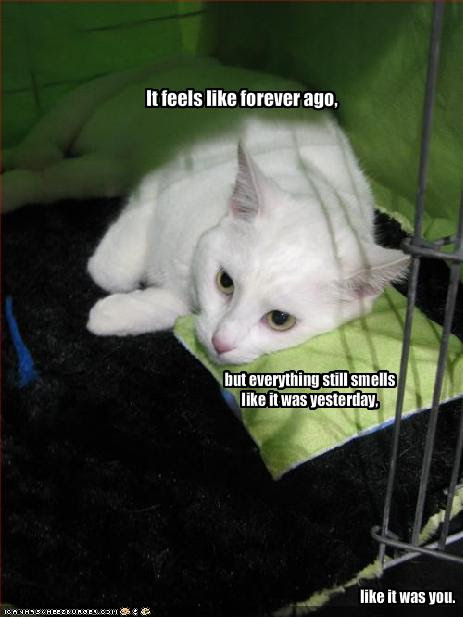 emo animal pictures