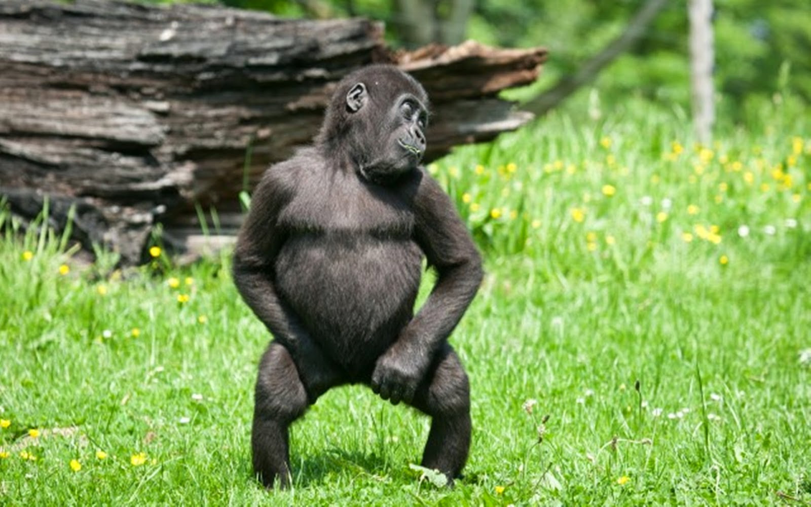 Funny Animals Dancing 28 High Resolution Wallpaper  Funnypicture.org