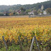 vines and village of Fixin