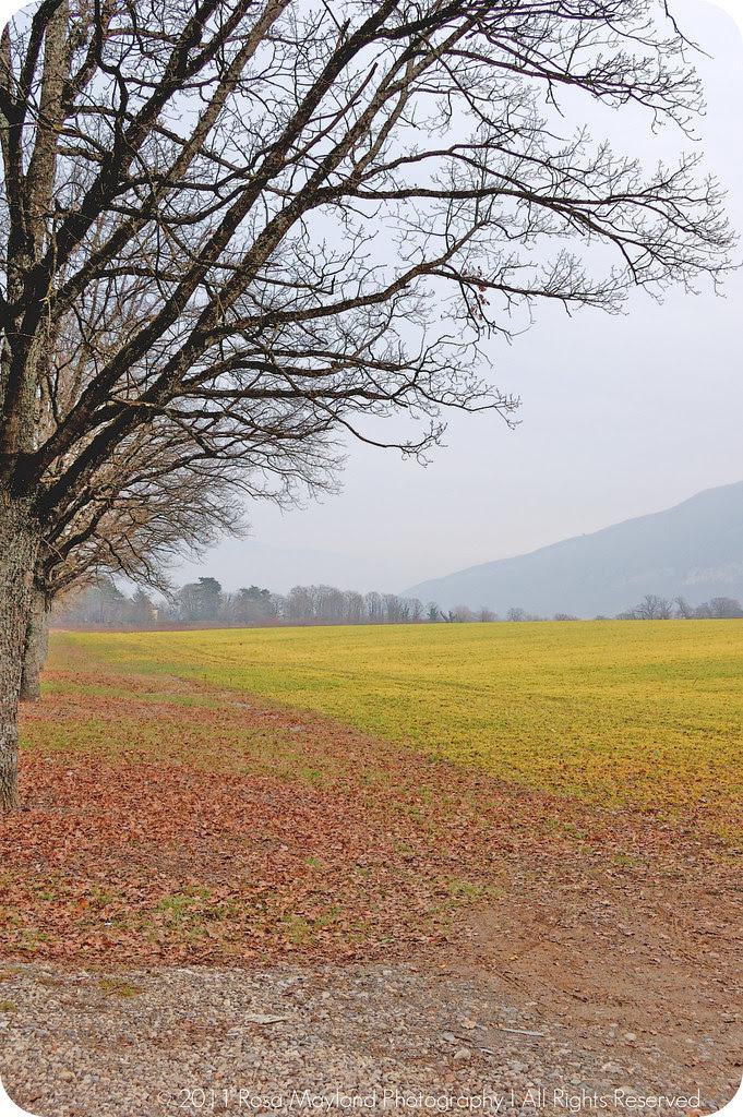 Spring Arve Field 1.2 bis