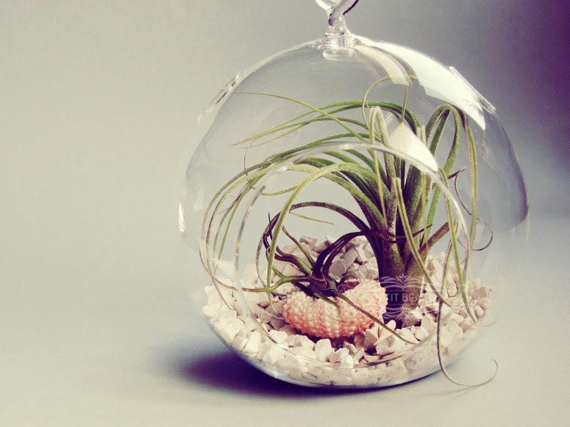 Shipwrecked // Air Plants in Glass Globe Hanging Terrarium Wedding Favor Decor Gift DIY Minimalist table centerpiece Floating tillandsia