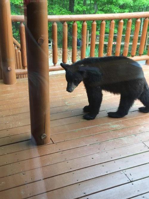 Una pareja iba a tomar un relajante baño en su hidromasaje, pero un atrevido oso llegó primero