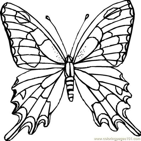 images  butterfly coloring pages  pinterest