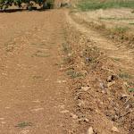 Avosnes | Sécheresse : les élevages et les cultures souffrent