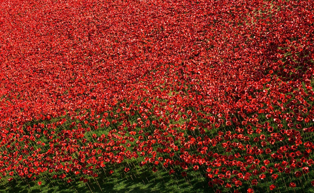 Tower of London poppies (