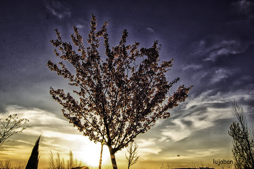 The tree at sunset... by lujaban