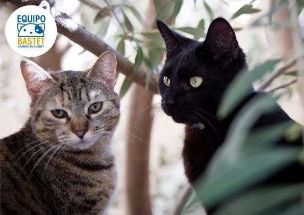 Las bolas de pelo, el peligro que encierra que los gatos sean tan limpios