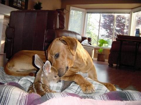 Friendship animals.  Dog and deer