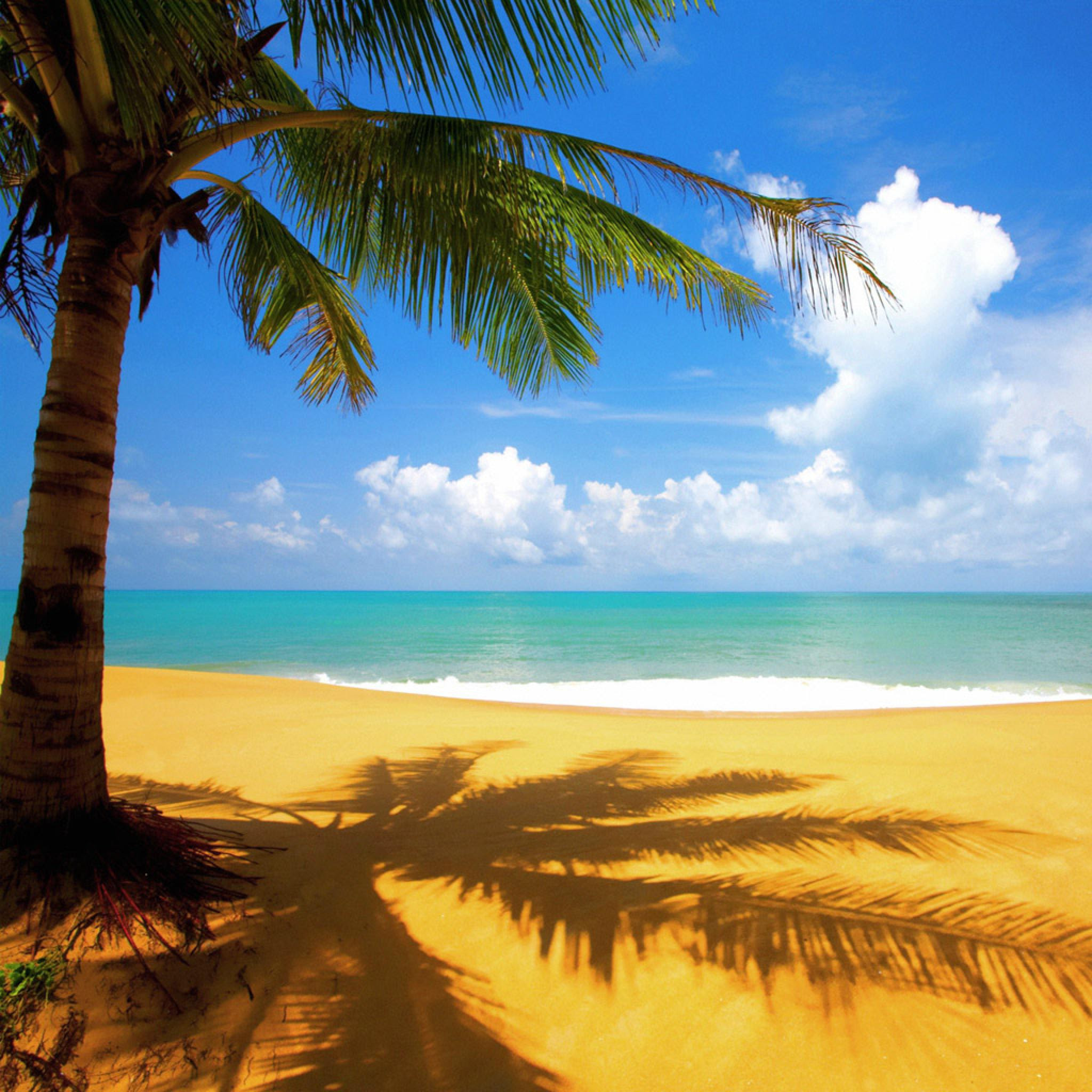 Nature - Tropical Palm Tree On Beach - iPad iPhone HD ...