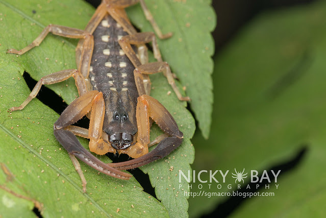 Scorpion - DSC_2703