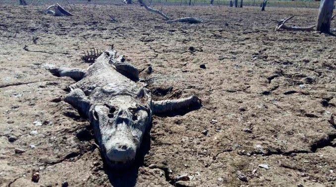 Río Pilcomayo, séchage Río Pilcomayo paraguay sécheresse, sécheresse paraguay, Pilcomayo rivière sécheresse, des milliers de poissons et de crocodiles mourir dans la disparition Pilcomayo de la rivière dans paraguay, Pilcomayo rivière disparition paraguay, Sequía mortel: peces y yacarés mueren por la bajante del Río Pilcomayo, Río Pilcomayo : Cocodrilos y peces mueren por sequía, sequía mortel: peces y yacarés mueren por la bajante del río Pilcomayo, desatre ecologico rio Pilcomayo
