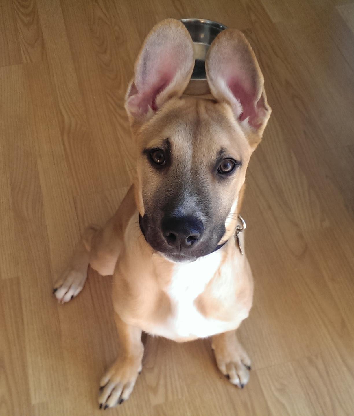 Her Ears Cross Over Aww