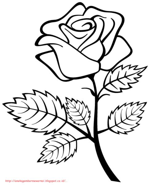 35 Gambar Bunga Sakura Tanpa Warna Terpopuler