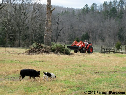 this week's Friday farm fix 11 - FarmgirlFare.com