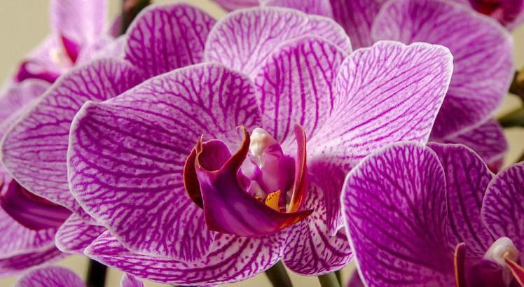 placa-orquídeas