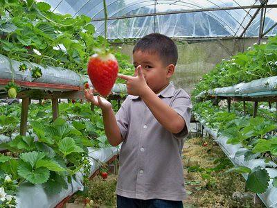 20120829_JulianGiantStrawberry