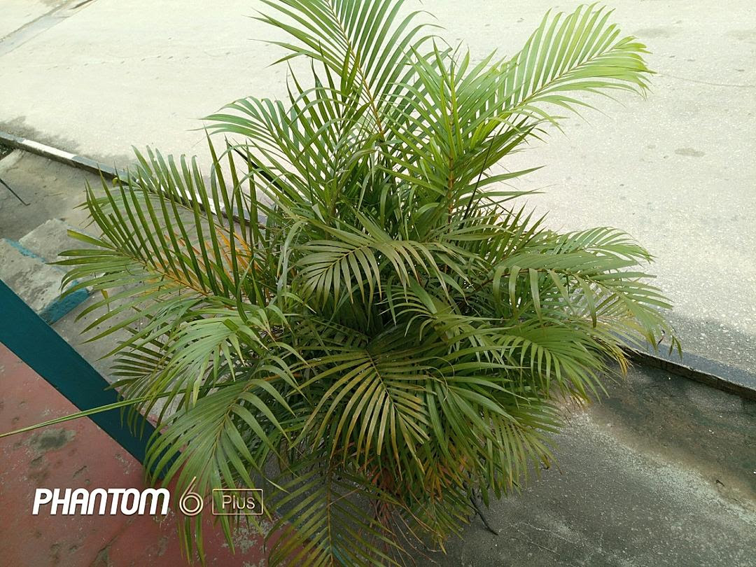 Lovely pictures and images taken with the Tecno phantom 6 plus