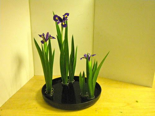 Iris - summer arrangement - near view by Ikebana Marisa