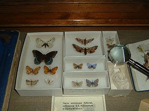 Butterflies collected by Nabokov
