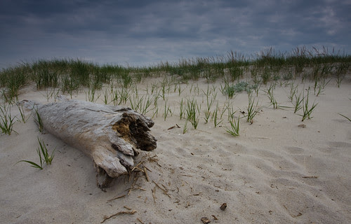 log on Crane Beach