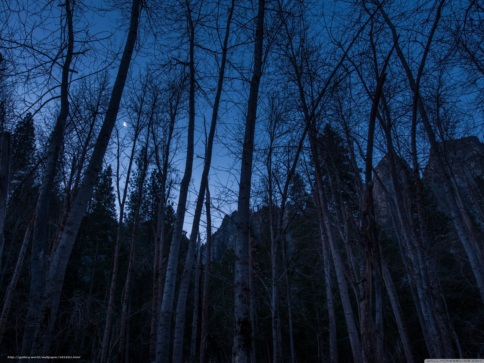 Download Wallpaper Nature Forest As Night In The Woods Free