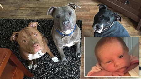 TRAGEDY: 3-week-old Baby Got Bitten to Death After Being Left Alone With the Family's Three Pitbulls