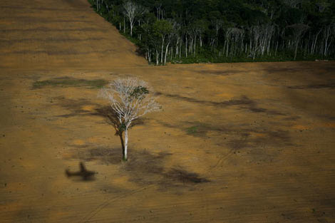 Deforestación causada por el cultivo de soja en la selva brasileña.
