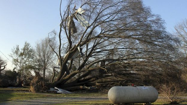A tree uprooted in Mississippi